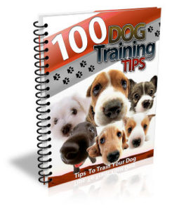 dog training plr